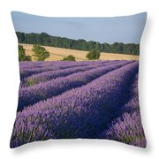 Cotswolds Lavender Throw Pillow