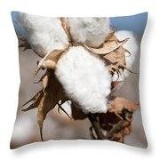 Cotton Bolls  Throw Pillow
