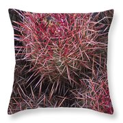 Cotton-top Cactus Detail Throw Pillow