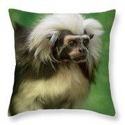 Cotton-top Contemplation Throw Pillow