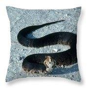 Cottonmouth Threat Display Throw Pillow