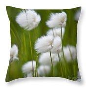 Cottonsedge Throw Pillow