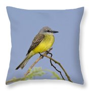 Couchs Kingbird Throw Pillow