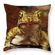 Couchs Spadefoot Toad Throw Pillow
