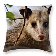 Coucou - Close-up Throw Pillow