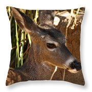Coues White-tailed Deer - Sonora Desert Museum - Arizona Throw Pillow