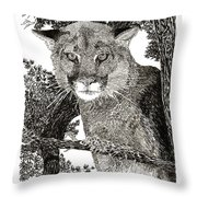 Cougar From Colorado Throw Pillow