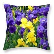 Country Road Irises  Throw Pillow