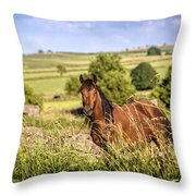 Countryside Horse Throw Pillow