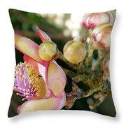 Couroupita Guianensis - Cannonball Tree Flowers Throw Pillow