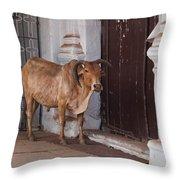Cow At Church At Colva Throw Pillow