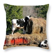 Cow Country Buffet Throw Pillow