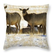 Cow Elk   #0479 Throw Pillow