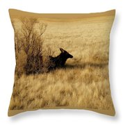 Cow Elk Throw Pillow by Johanna Elik