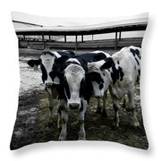 Cow Hugs Throw Pillow