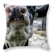 Cow Kiss Me Throw Pillow