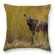 Cow Moose   #1638 Throw Pillow