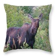 Cow Moose Portrait Throw Pillow