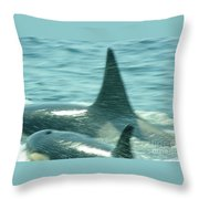 Cow Orca And Her Calf Throw Pillow