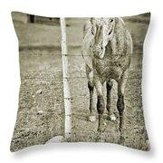 Cow Pony Throw Pillow