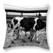 Cows Coming And Going Throw Pillow