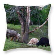 Cows Of Color Throw Pillow