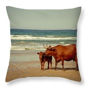 Cows On Sea Coast Throw Pillow by Raimond Klavins