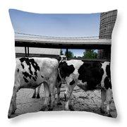 Cows Peek A Boo Throw Pillow