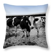 Cows Three In One Throw Pillow