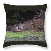 Coyote Curled Up Throw Pillow