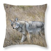 Coyote Glare Throw Pillow
