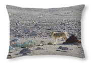 Coyote In Death Valley National Park -a Throw Pillow