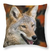 Coyote In Maple Throw Pillow
