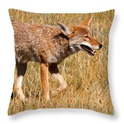 Coyote In Rocky Mountain National Park Throw Pillow
