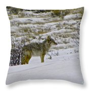 Coyote In The Snow Throw Pillow