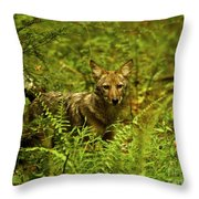 Coyote Of The Woods Throw Pillow