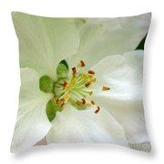 Crab Apple Blossom  Throw Pillow