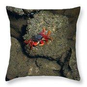 Crab Cake Throw Pillow