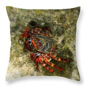 Crab In Cozumel Throw Pillow