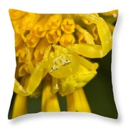 Crab Spider Throw Pillow
