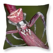 Crab Spider Hunting On Orchid Throw Pillow
