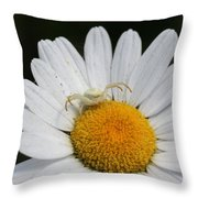 Crab Spider On Daisy Throw Pillow