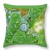 Crab Spider - Thomisidae Throw Pillow