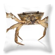 Crab Suriname Throw Pillow
