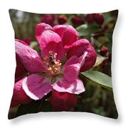 Crabapple Insect Throw Pillow