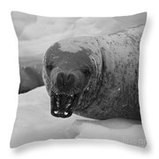Crabeater Seal.. Throw Pillow