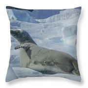 Crabeater Seal On An Iceberg Throw Pillow