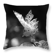 Cracked Wing Throw Pillow