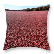 Cranberry Bog In New Jersey Throw Pillow