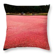 Cranberry Harvest 4 Throw Pillow